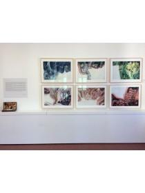 Tour tra gli affreschi e al nuovo Museo Zavřel